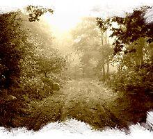 Woodland Wonderland by Graham Ettridge