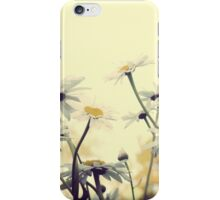 Summer Chamomiles 7 iPhone Case/Skin