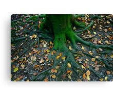 Rooted 11.. Canvas Print
