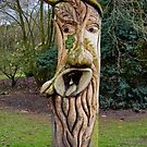 Face in Wood - Tree Stump by AnnDixon