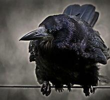 crow 3 by eric abrahamowicz