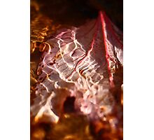 Leaf in a Stream Photographic Print