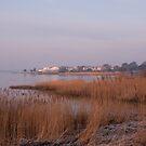 Harbour Reedbeds by Jennifer Bradford