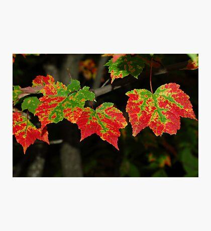 nature's tie dye Photographic Print