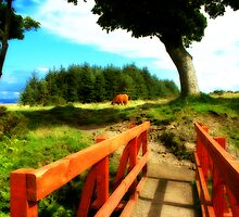 Highland Cow by brianmcgui