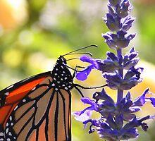 Monarch 2 by jujubean
