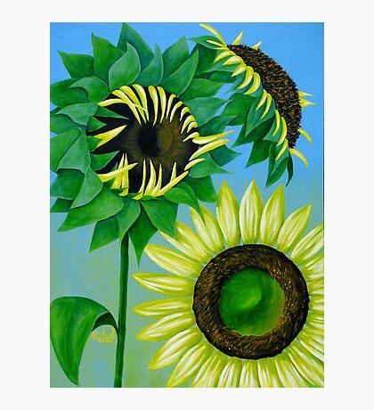 """Three Sunflowers"" original nature floral painting Photographic Print"