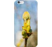 Chestnut Tree Buds - Spring Has Come iPhone Case/Skin