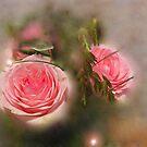 Hidden Beauties by Rosy Kueng Photography