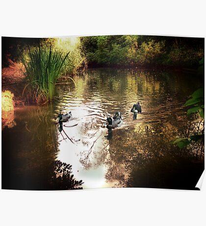 Grym's Dyke Duck Pond Poster