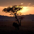 Serengeti Sunset by Jake Freeedman