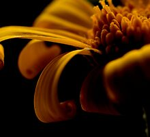 Goldilocks by Jenni77