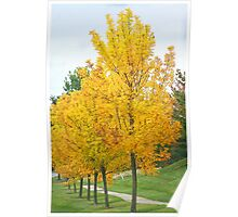 Yellow Fall Colors Poster
