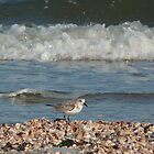 Sandpiper at the Shore by Margie Avellino