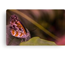 Tropical Butterfly Close-up Canvas Print