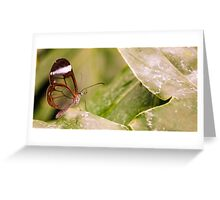 Clear 'Glasswing' Tropical Butterfly Greeting Card