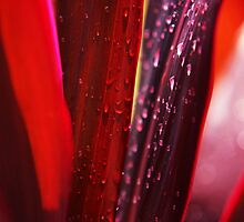 Red Leaves. Macro by JennyRainbow