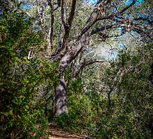 Walk Among the Big Trees by Debra Martz