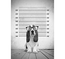 Guilty Puppy Photographic Print