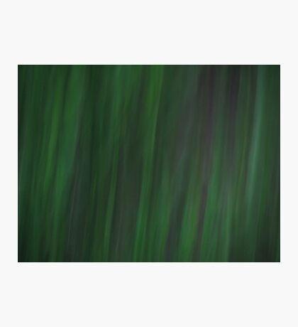 Grass - Dark Photographic Print