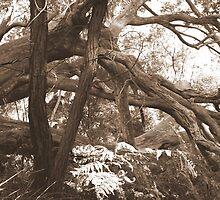 Tangled woods 2 by Tammy Serdiuk