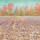 Fields of White by Susan Werby
