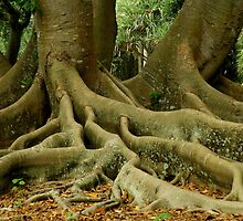 Roots by artisandelimage