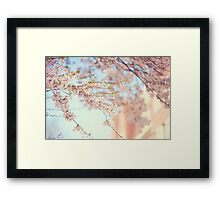 Pink Touch of Softness. Pink Spring in Amsterdam Framed Print