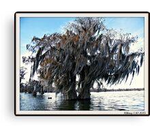 Double Cypress Canvas Print