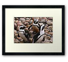 Penguin Pals Framed Print
