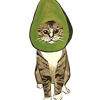 Avocato by christinel
