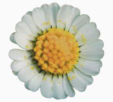 Big daisy  by ghjura