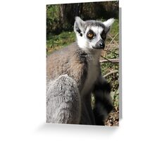 Furry Stripey Nomad Greeting Card