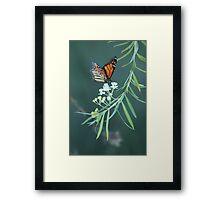 sting flower Framed Print