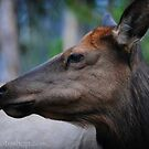 Deer Profile Portrait 1 by artsphotoshop