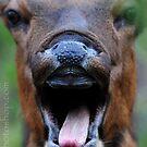 Frightened Deer!  :) by artsphotoshop