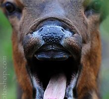 Frightened Deer!  :) by artsphotoshop