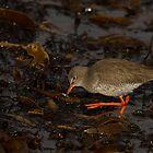 Redshank by Jon Lees