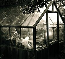 """The Greenhouse""  by Bradley Shawn  Rabon"