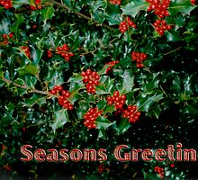 'Seasons Greetings' 1 Card by haymelter