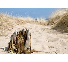 Old Piling in the Sand Photographic Print
