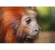 Little Monkey Photographic Print