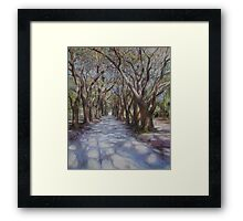 Avenue of the Oaks Framed Print