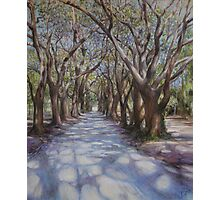 Avenue of the Oaks Photographic Print
