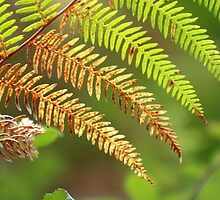 Autumn Fern by savage1
