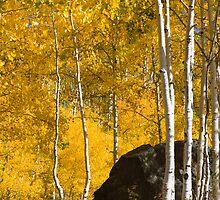 Colorado Fall by bluerabbit