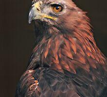 Birds of Prey by Krys Bailey