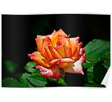 City of New Orleans Mini Rose Poster
