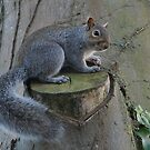 The tail of Squirrel Nutkin by Rivendell7