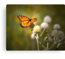 Spread Your Wings & Fly My Pretty Butterfly Canvas Print